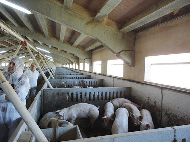 js14-granja-dentro