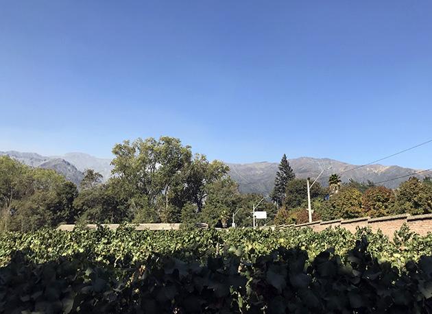 Viña Cousiño Macul em Santiago no Chile